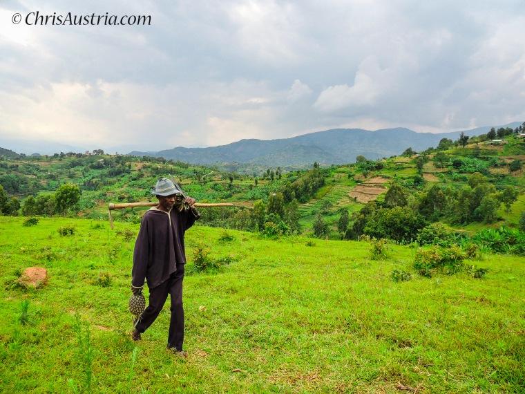 Kibuye_Rwanda_Pineapples.jpg