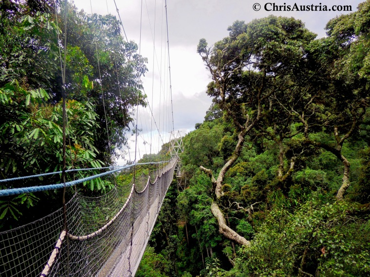 Nyungwe_Bridge