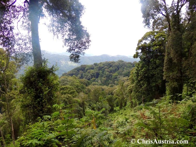Nyungwe_Forest.jpg