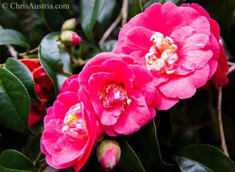 Grandma_Jensen_flowers