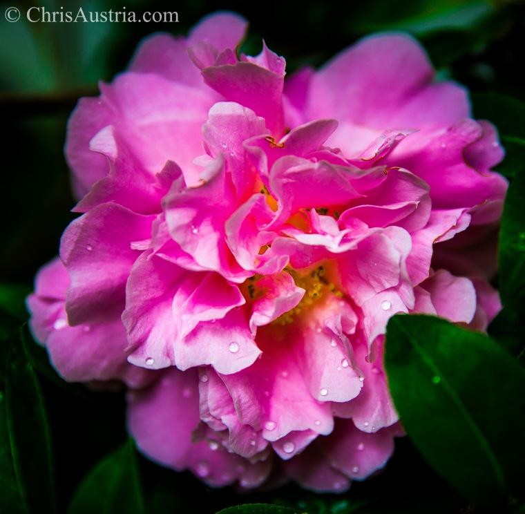 Grandma_Jensen_flowers_2