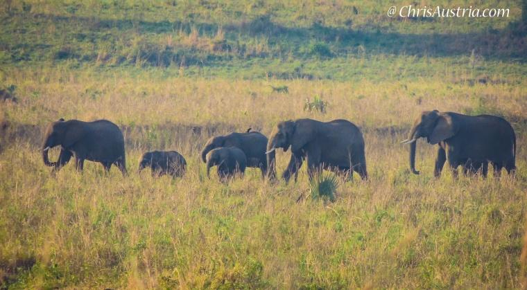 Kidepo_Elephant_Family_Uganda.jpg