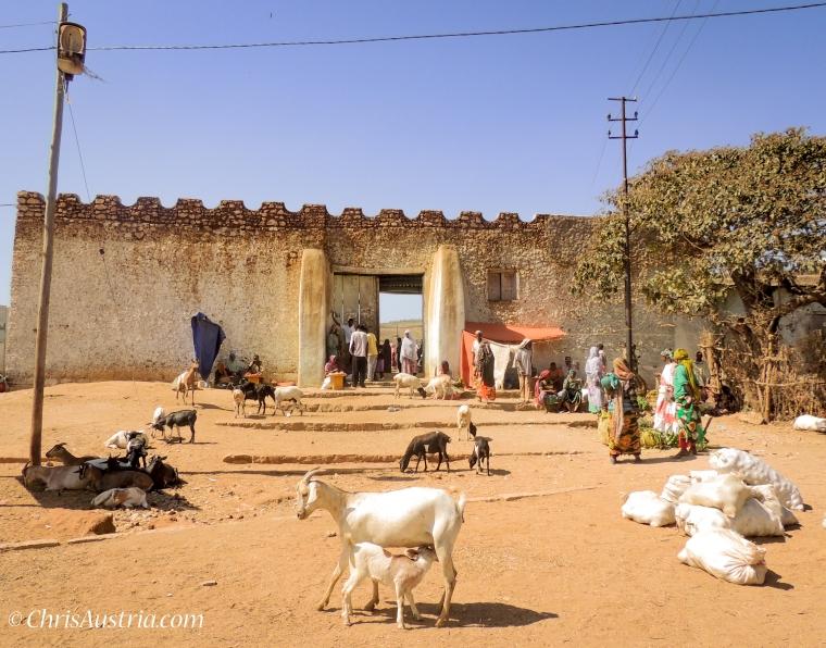 Ethiopia_Harar_Goats_WM