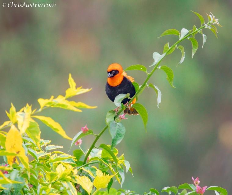 Rwanda_Bird_DPI_72_WM